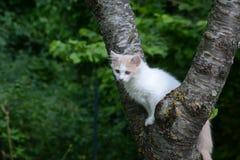 Молодой кот Стоковые Изображения