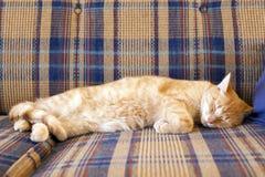 Молодой кот Slepping стоковая фотография rf
