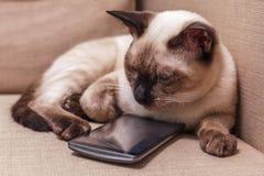 Молодой красивый тайский кот лежа на кресле и играя с мобильным телефоном Стоковое Изображение
