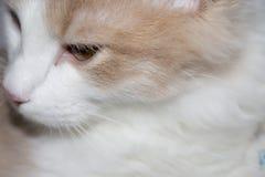 Молодой красный кот Стоковые Изображения