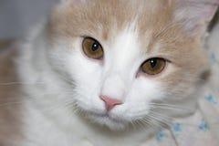 Молодой красный кот Стоковые Фото
