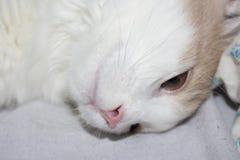 Молодой красный кот Стоковое фото RF