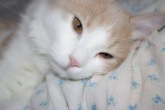 Молодой красный кот Стоковые Фотографии RF