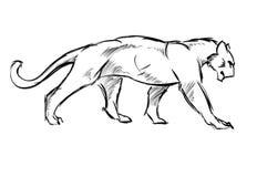 Молодой кугуар кот одичалый бесплатная иллюстрация