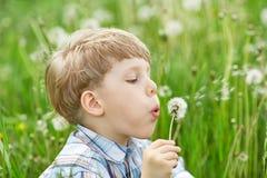 Молодой мальчик в луге с одуванчиками Стоковое фото RF