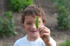 Молодой мальчик держа свежий стручок зеленого гороха Стоковое Фото