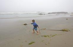 Молодой мальчик играя с келпом на пляже в тумане Стоковое Изображение