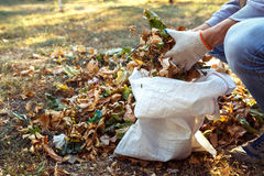 Молодой мальчик собирает упаденные листья в осени Стоковое Изображение RF