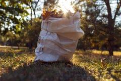 Молодой мальчик собирает упаденные листья в осени Стоковые Фотографии RF