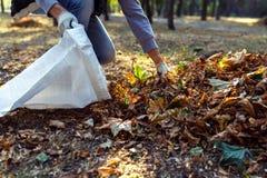 Молодой мальчик собирает упаденные листья в осени Стоковые Фото