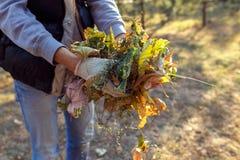 Молодой мальчик собирает упаденные листья в осени Стоковое Изображение