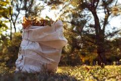 Молодой мальчик собирает упаденные листья в осени Стоковое фото RF