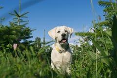 Молодой милый щенок маленькой собаки в зеленом поле Стоковые Фото