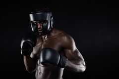 Молодой мужской боксер в воюя позиции Стоковая Фотография