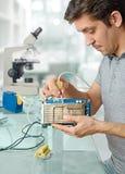 Молодой мужской техник очищает небезупречный процессор компьютера Стоковое Изображение RF