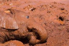 Молодой пакостный играть слона стоковое изображение rf