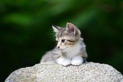 Молодой прелестный котенок Стоковые Изображения RF