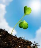 Молодой росток на зеленой предпосылке Стоковое фото RF