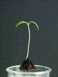 Молодой росток с образцом почвы в лаборатории Стоковая Фотография