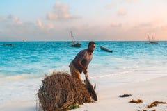 Молодой рыболов носит больших рыб на красивом побережье океана в утре, Nungwi, Kendwa, острова Занзибара, Танзании стоковая фотография rf