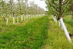 Молодой сад зацвел весна Стоковое фото RF