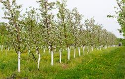 Молодой сад зацвел весна Стоковая Фотография RF