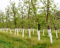 Молодой сад зацвел весна Стоковая Фотография