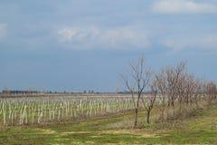 Молодой сад яблока Расти и заботить для сада яблонь Стоковое Изображение