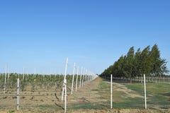 Молодой сад яблока Стоковые Изображения RF
