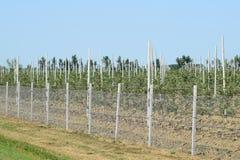 Молодой сад яблока Стоковые Фотографии RF