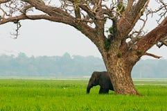 Молодой слон в саванне стоковые фотографии rf