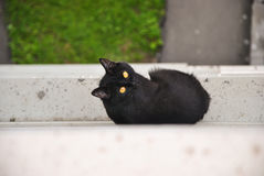 Молодой черный кот избегал от комнаты и сидеть снаружи на силле окна многоквартирного дома и смотреть вверх и вокруг Стоковые Фотографии RF