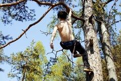 Молодой человек взбираясь на дереве с веревочкой Стоковое Изображение