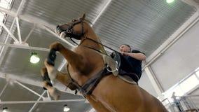 Молодой человек и его красивый коричневый жеребец поднимая вверх Коричневая лошадь, стоя на свое заднем Всадник с поднимать лошад сток-видео