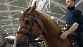 Молодой человек и его красивый коричневый жеребец поднимая вверх Коричневая лошадь, стоя на свое заднем Всадник с поднимать лошад акции видеоматериалы