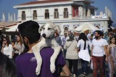Молодой человек носит его щенка Стоковое Фото