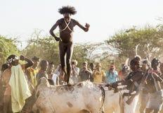 Молодой человек скачет быков Turmi, долина Omo, Эфиопия стоковые фото