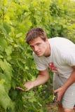 Молодой человек смотрит в виноградинах Стоковое Изображение