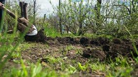 Молодой человек фермера выкапывает землю с старым пакостным лопаткоулавливателем в саде Промежуток времени видеоматериал