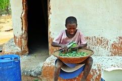 Молодой шпинат вырезывания девушки Batonka, Gokwe северное, Зимбабве Стоковая Фотография