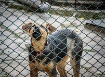 Молодой щенок на приюте для животных стоковое изображение