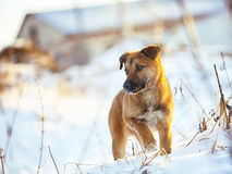 Молодой щенок на снеге в зиме Стоковые Фотографии RF