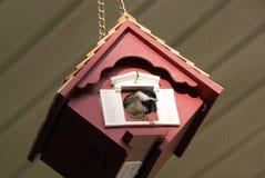 Молодой Chickadee Каролины Стоковое фото RF