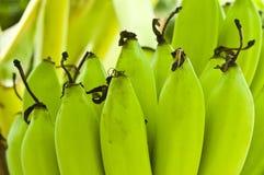 Молодые бананы. Стоковые Изображения