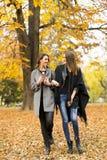 Молодые женщины в парке осени Стоковое Изображение