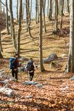 Молодые женщины идя в лес Стоковые Фото