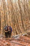 Молодые женщины идя в лес Стоковые Фотографии RF