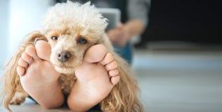 Молодые женщины отдыхают с собакой на поле дома Стоковая Фотография