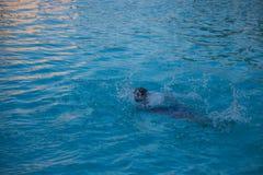 Молодые женщины плавают в бассейне Стоковые Фотографии RF
