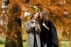 Молодые женщины с мобильным телефоном в лесе осени Стоковые Фото